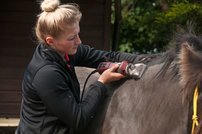 Clipping a Horse