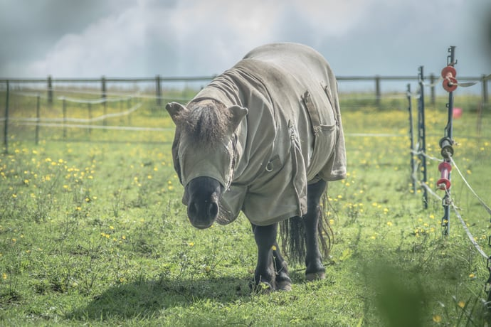 Best Fly Sheet for Horses in Hot Weather