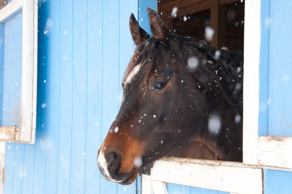 Cold Horse in a Barn