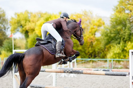 Competition Horse