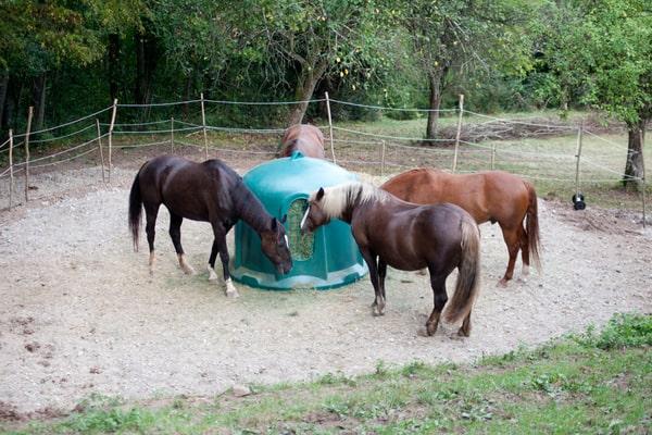 Horse Hay Feeding Rack