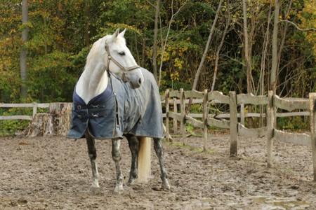 Horse Rain Blanket