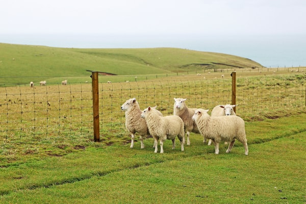 Sheep Stock Fencing